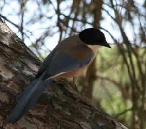Fauna de la Reserva Natural de Ría Formosa